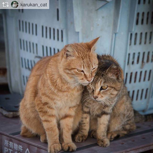Repost from @karukan_cat @TopRankRepost #TopRankRepost 寄り添うふたり(兄妹)厳しい外の世界もふたり一緒なら頑張って生きていけるよね。.She stood close to her brother..#僕らの居場所は言わにゃいで#猫好きな人と繋がりたい#ねこ#ぬこ#猫#ねこ部#にゃんこ#野良猫#のらねこ#のらねこ部#地域猫#外猫#のらねこストーキング部#straycat#catinstagram#cats#instacat #nekoclub_jpn#neko#catsofinstagram#catstagram#みんねこ#NEKOくらぶ#ねこすたぐらむ#にゃんすたぐらむ#猫ポトレ部#猫写真#猫写真協同組合