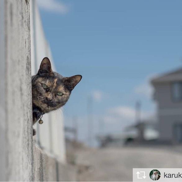 Repost from @karukan_cat @TopRankRepost #TopRankRepost ..家政婦はミタ.Someone to watch over you..ブログ更新しました!Innovative cat photographers group.http://lcpg25.blogspot.jp/?m=1.リンクから直接飛べないんで、長いですがinnovative cat photographers groupでググってくださーい!.#僕らの居場所は言わにゃいで#猫好きな人と繋がりたい#ねこ#ぬこ#猫#ねこ部#にゃんこ#野良猫#のらねこ#のらねこ部#地域猫#外猫#のらねこストーキング部#straycat#catinstagram#cats#instacat #nekoclub_jpn#neko#catsofinstagram#catstagram#みんねこ#NEKOくらぶ#ねこすたぐらむ#にゃんすたぐらむ#猫ポトレ部#猫写真#猫写真協同組合