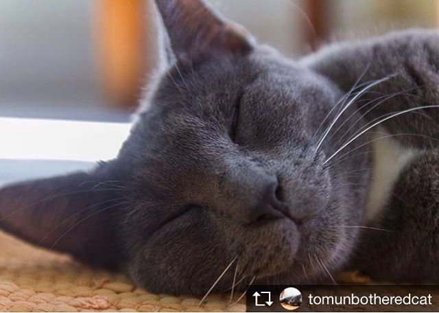 Repost from @tomunbotheredcat @TopRankRepost #TopRankRepost Anytime is sleep time #instacat #catsofinstagram #cat  #cute #sleep #whiskers