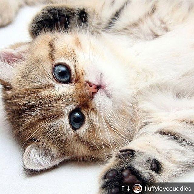 Repost from @fluffylovecuddles @TopRankRepost #TopRankRepost I'm sexy and I know it! •••#fluffylovecuddles #cat #cats #catsofinstagram #cats_of_instagram #cat_of_instagram #catlover #catlove #welovecats #cutecat #catstagram #instacat #catofinstagram #catphotography #catloversclub #catsoninstagram #catvideo #pet #pets #catsnack #lickingcat #lovecats #ilovecats #japanesecat #japancat #cutie #cutecats #kitten #kittenplay