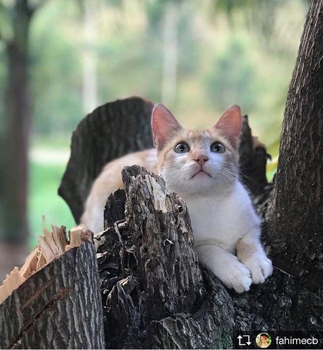 Repost from @fahimecb @TopRankRepost #TopRankRepost #cats #felinos #cats #amorporgatos #chaninho #holidayswithmypet @aspca