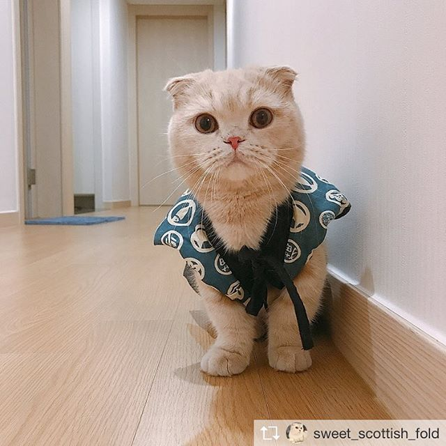 Repost from @sweet_scottish_fold @TopRankRepost #TopRankRepost  Can you Caption for this amazing photo? - - - - - : @susan_kimm- - - - -~DOUBLE TAP~ - - - - -Feel free toSend us your best cat pics or tag me @sweet_scottish_fold in your picture