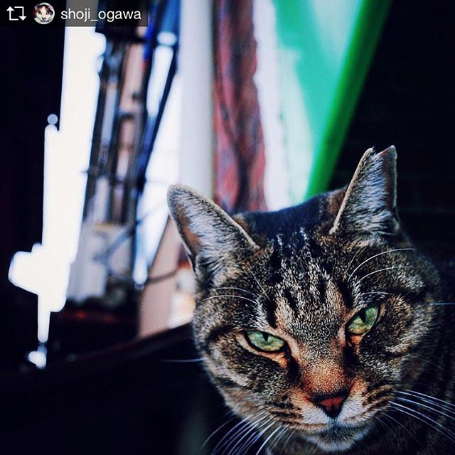 Repost from @shoji_ogawa @TopRankRepost #TopRankRepost #kamagasaki #cat #釜ヶ崎