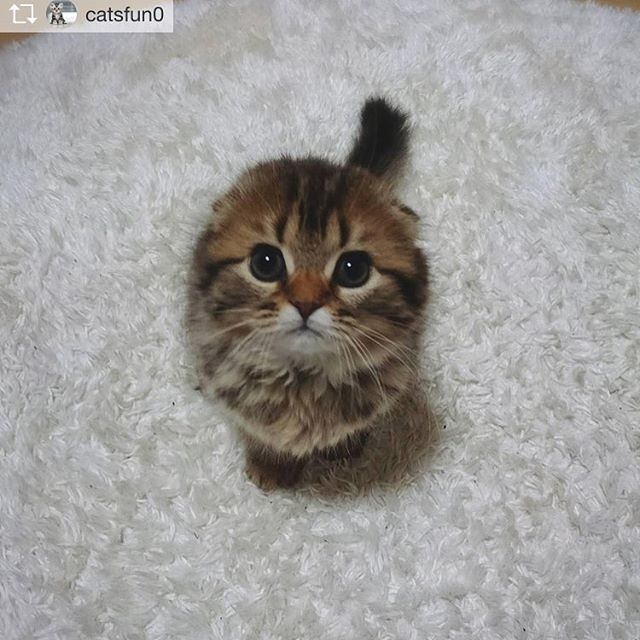 Repost from @catsfun0 @TopRankRepost #TopRankRepost Always beautiful, Cats stole my life every day!◖◗◖◗◖◗◖◗◖◗◖◗◖◗◖◗◖◗◖◗◖◗◖◗◖◗◖◗◖◗◖◗◖◗◖◗ credit to @catsloversworld-#instacat #catlovers #cats #meow #kitty #kitten #catstagram #catsofinstagram #cute #pet