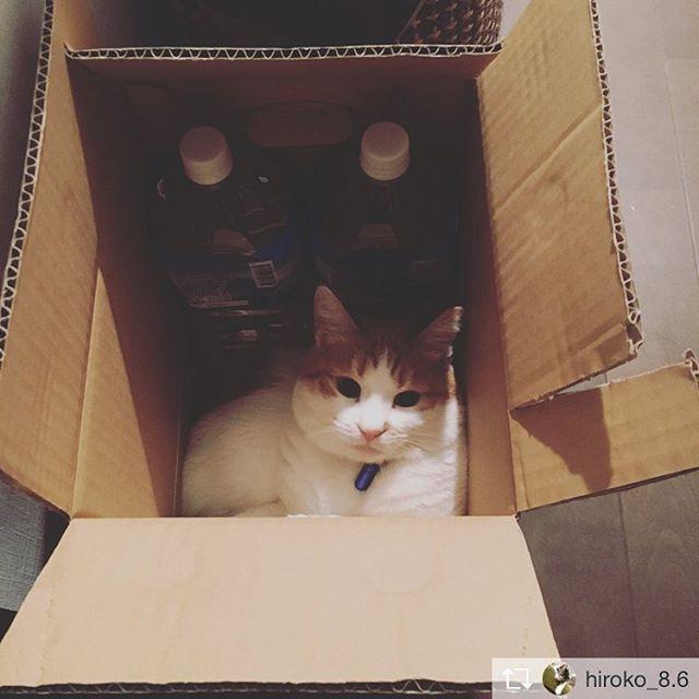 https://instagram.com/p/BhKpN0Sn6V6/Repost from @taku65kg @TopRankRepost #TopRankRepost やっぱりはみでてるハナ(=^x^=)#cat#猫#猫のいる生活#kawaii#cute#ねこ#ねこ部#にゃんこ#にゃんすたぐらむ#子猫#にゃんだふるらいふ#保護猫#ふわもこ部#ねこあつめ#ねこのきもち#猫カフェ#にゃんこ先生#kitty#catstagram#petstagram#instacat#meow#catoftheday#ilovemycat