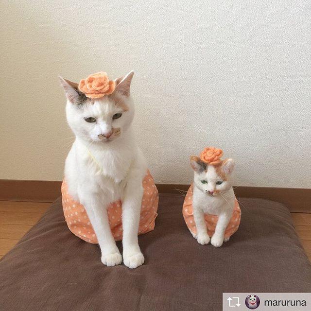 Repost from @maruruna @TopRankRepost #TopRankRepost  昨日のpicに沢山のイイね♡コメント♡を いただきありがとうございました️.あたし達₍^·͈༝·͈^ฅ 花の子になってマルルン & ちびマルルンからあにゃたに(心に) お花を贈ります。るるるん.#感謝の気持ちを気持ちだけ贈ります。#花の子マルルン#のせ猫#お花の妖精#スカートをはいた猫#もふもふ#ありがとう#三毛猫#ねこと暮らす#猫生活#猫#ピクネコ#ねこ#catlife#happycat #cute#cat#ペコねこ部#羊毛フェルト#ハンドメイド#にゃんだふるらいふ#みんねこ#花#猫がいて幸せ